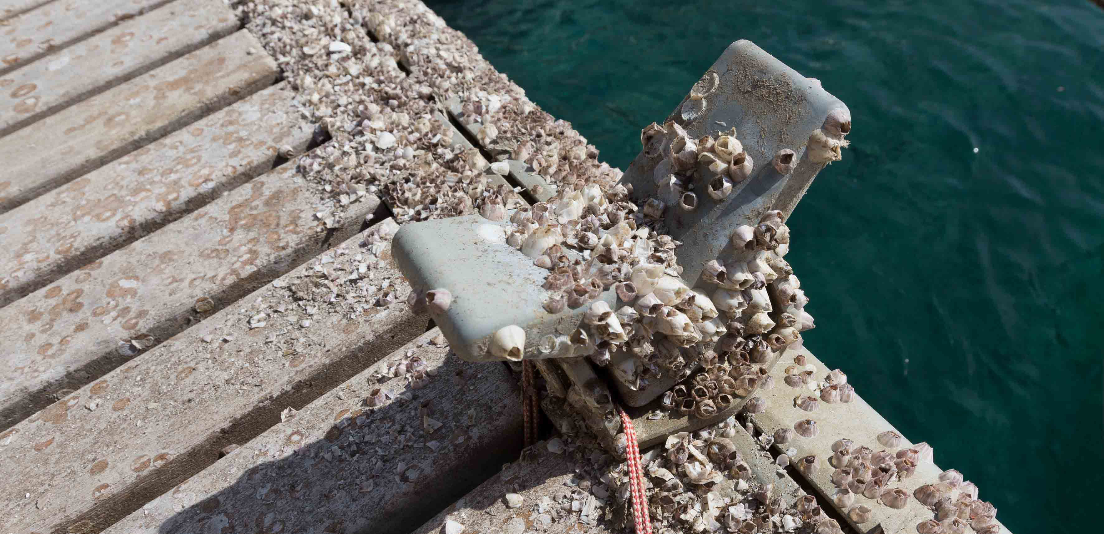 Image of abandoned (empty) Acorn barnacle shells attached to aft beam of catamaran.