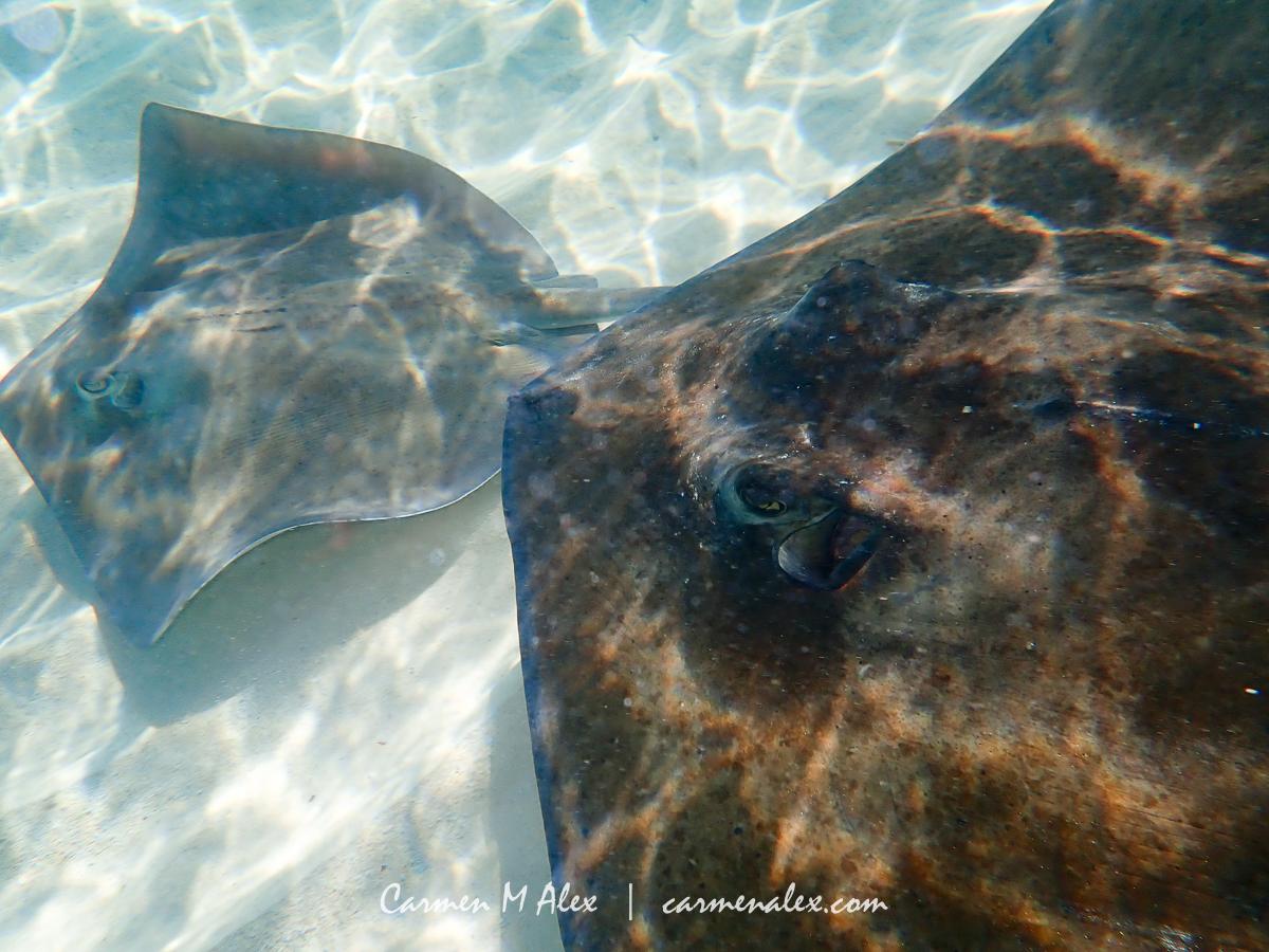 BAH-Manjack-Stingrays-CarmenMAlex-074sm