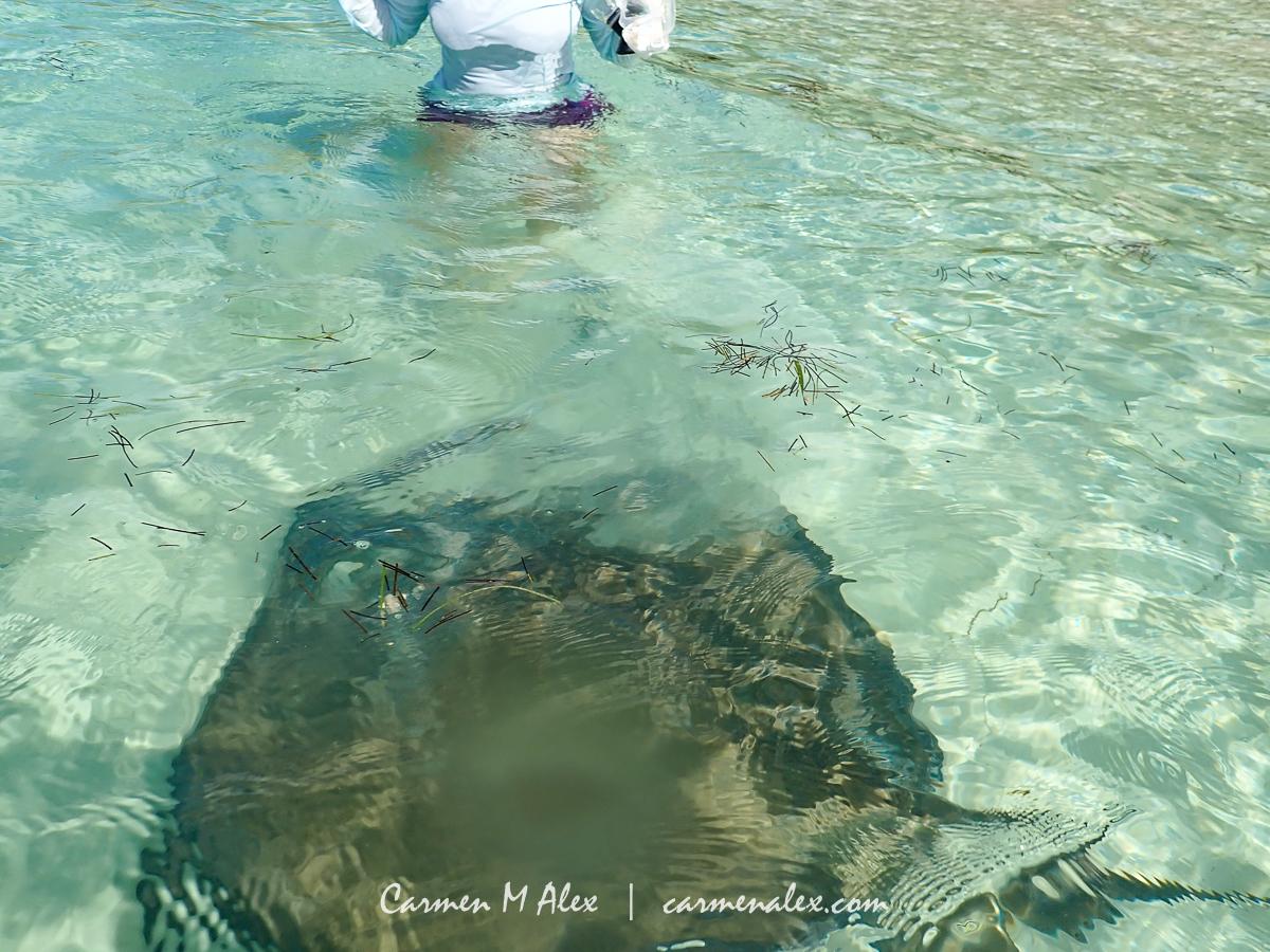 BAH-Manjack-Stingrays-CarmenMAlex-098-Edit